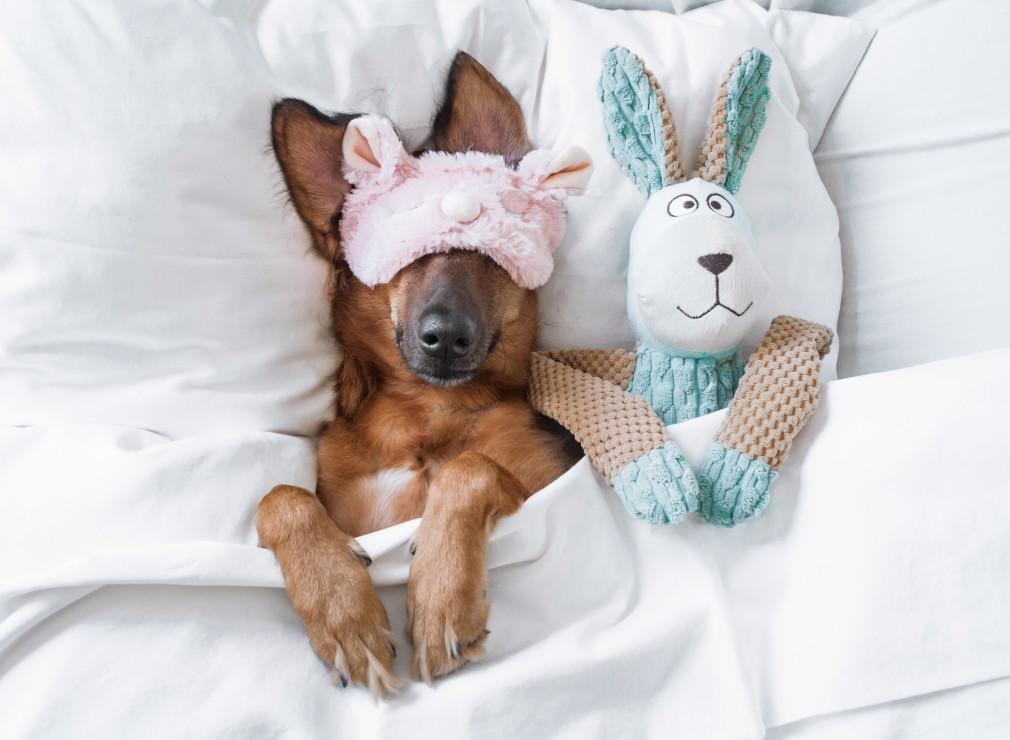 chien paisible lit peluche
